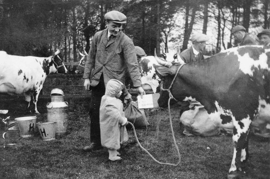 Champion Ayrshire cow owned by Robert Harvie of Waterside.  Pictured at the 1932 Mearns Cattle Show.